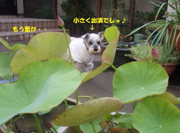 c0098501_1636217.jpg