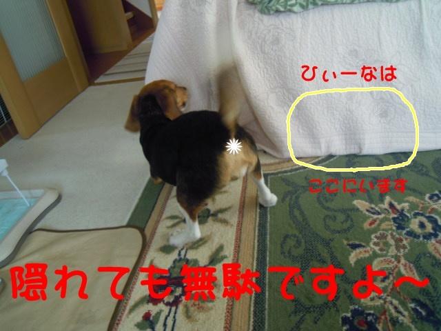 c0166622_8432597.jpg