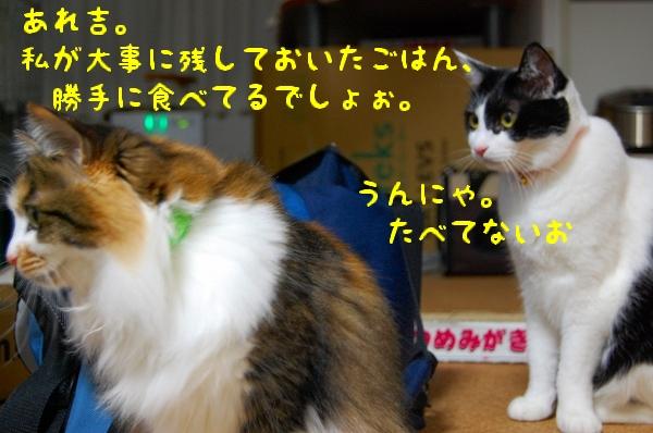 c0181639_204327.jpg