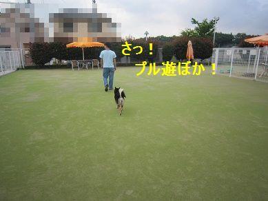 a0137294_236123.jpg