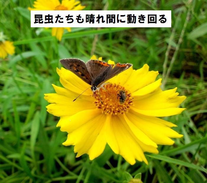 c0025171_2249471.jpg