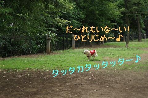 c0214455_171380.jpg
