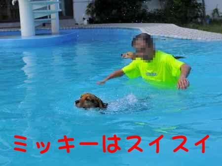 c0166622_1120822.jpg