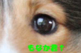 e0195743_5295254.jpg