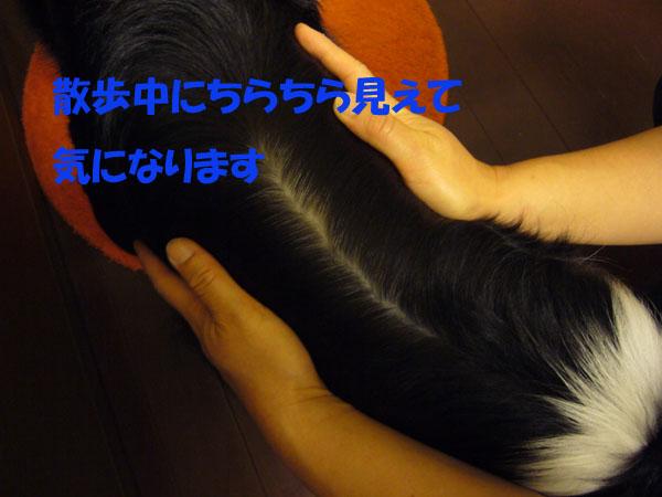 e0093802_920491.jpg