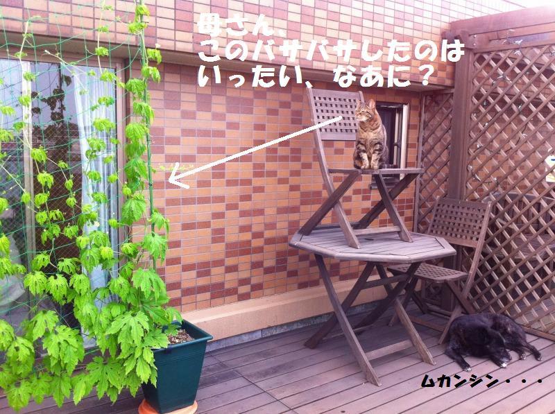 a0147921_22454766.jpg