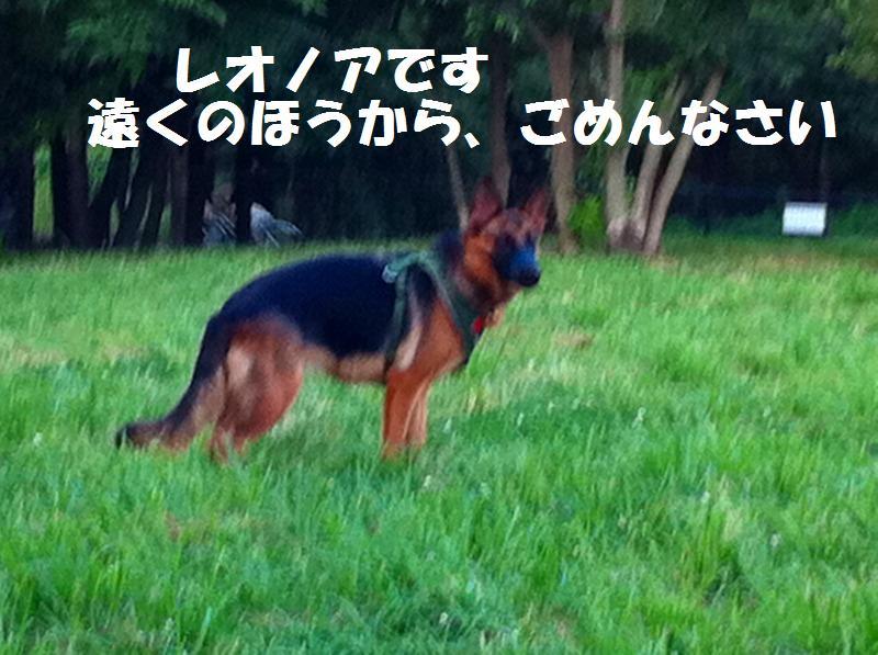a0147921_17593169.jpg