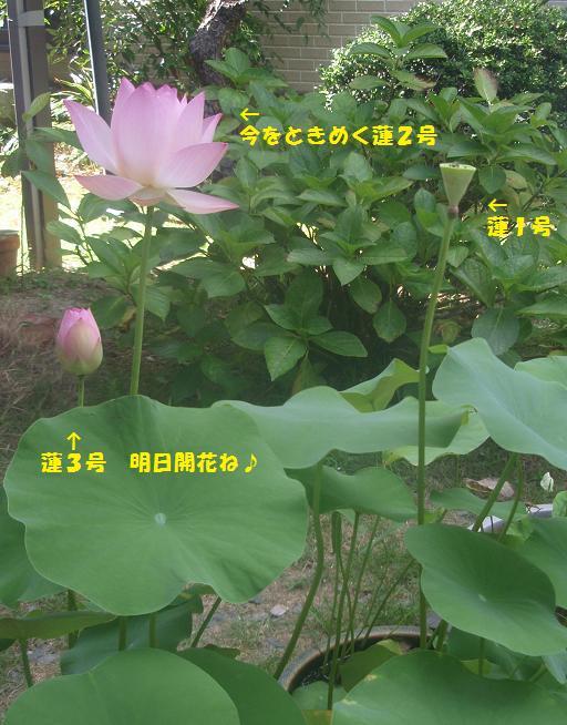 c0098501_2015329.jpg