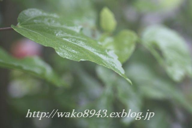 c0187403_15593859.jpg