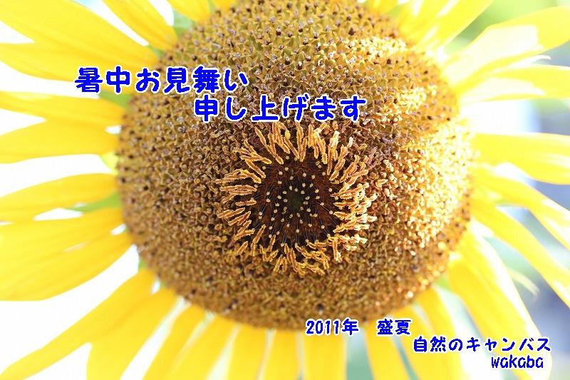 e0052135_1428648.jpg