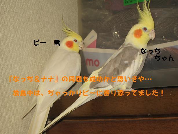 e0027078_14453096.jpg