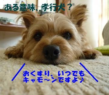 a0154801_2015517.jpg
