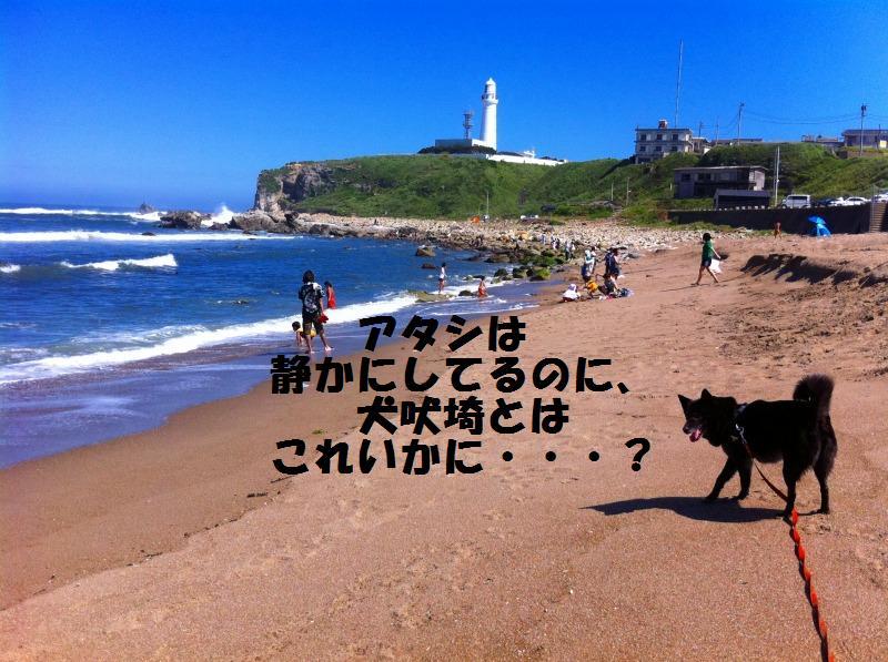 a0147921_20401138.jpg