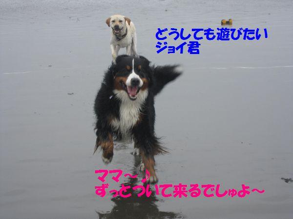 a0108146_17461426.jpg