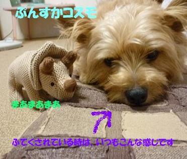 a0154801_946478.jpg
