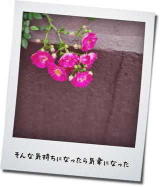 c0207596_22265522.jpg