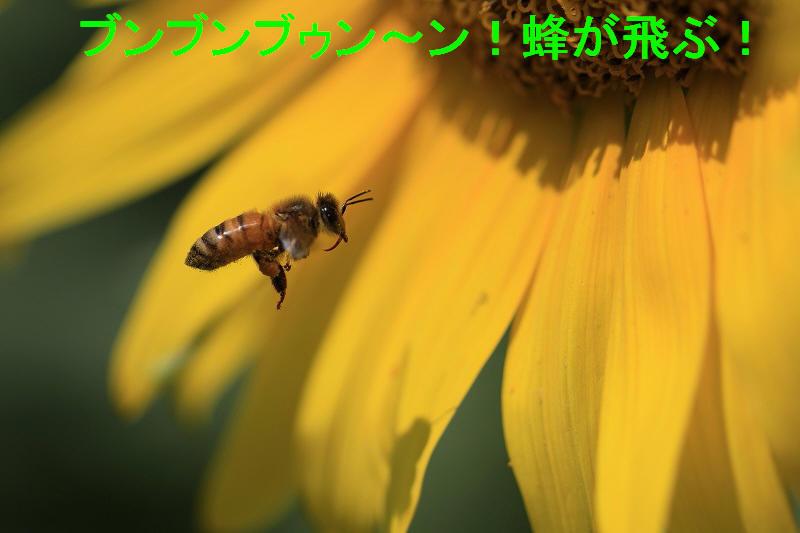 a0188405_15452197.jpg