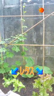 a0167341_13195515.jpg