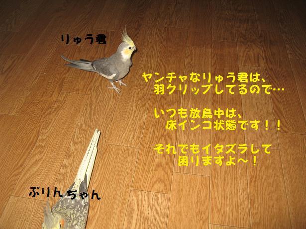e0027078_12511362.jpg