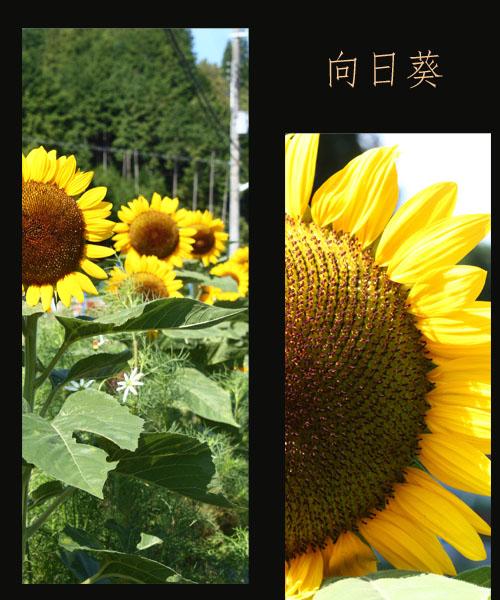 c0167576_6233294.jpg