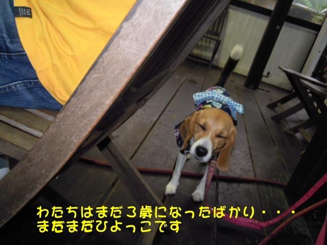 c0166622_7251022.jpg