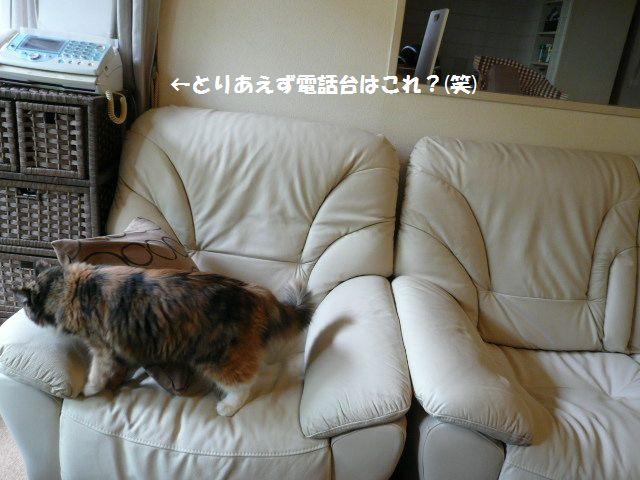 e0094407_1350959.jpg