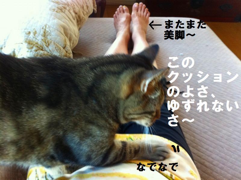 a0147921_1141636.jpg