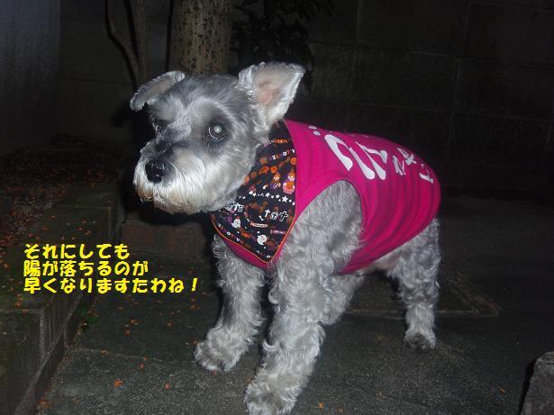 c0098501_2011638.jpg