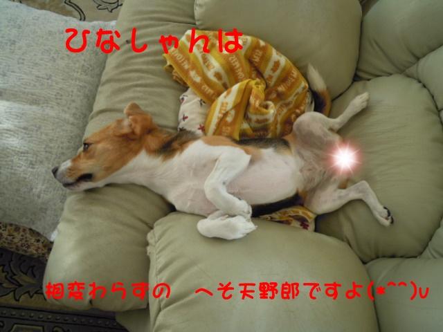 c0166622_1535343.jpg