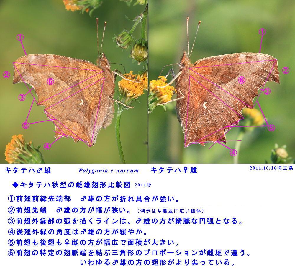 a0146869_4175429.jpg