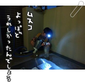a0114467_6373155.jpg