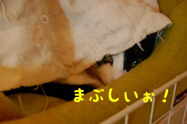 c0181639_0213210.jpg