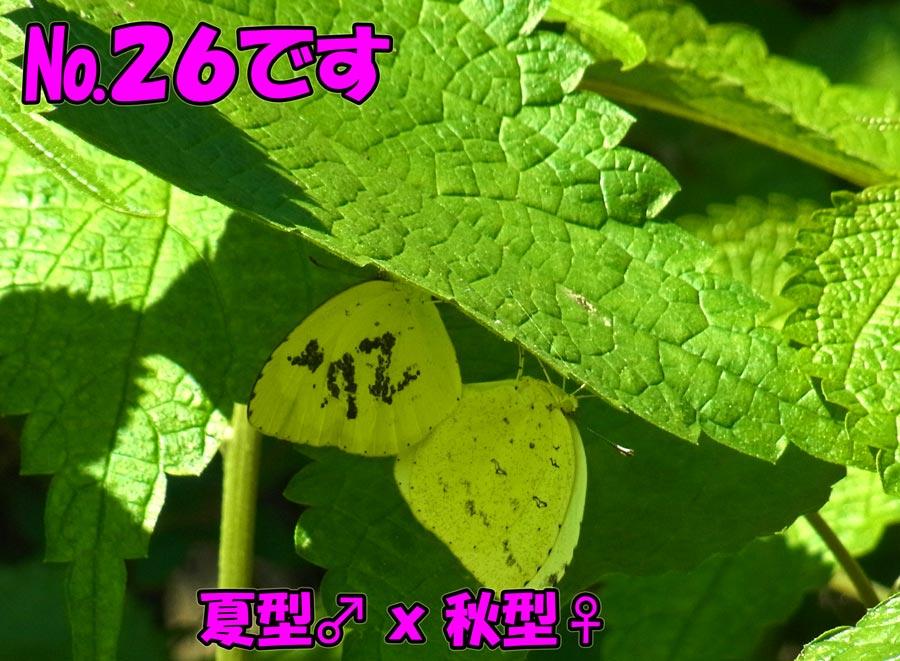 e0253104_22441780.jpg