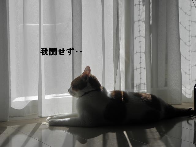 e0216469_17391369.jpg