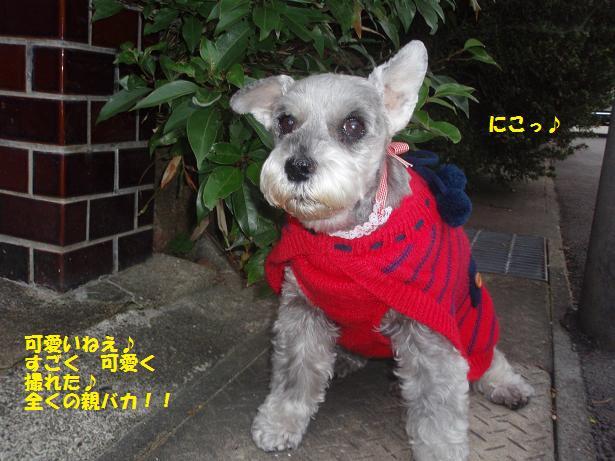 c0098501_1850736.jpg