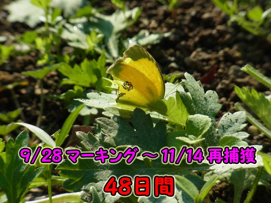 e0253104_1732329.jpg