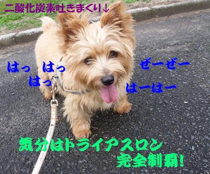 a0154801_1733947.jpg