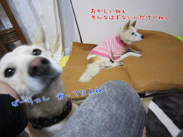 c0000189_1501039.jpg