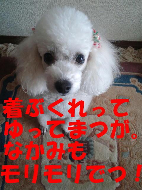 c0117239_12114560.jpg