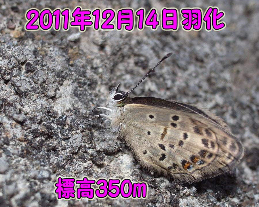 e0253104_17594556.jpg