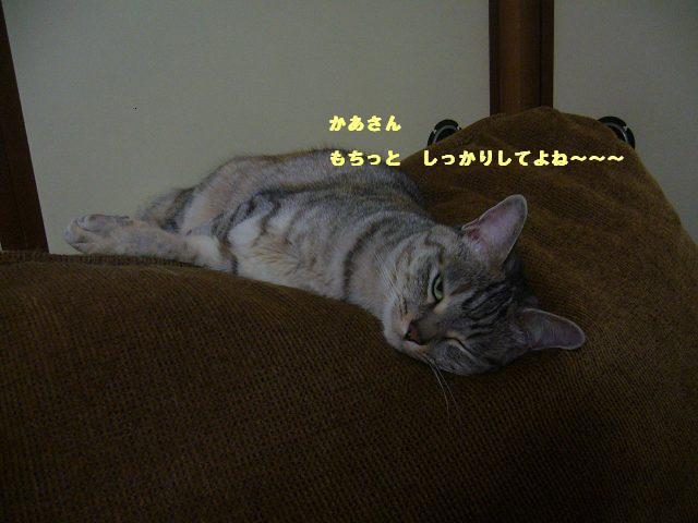 c0229423_1210328.jpg