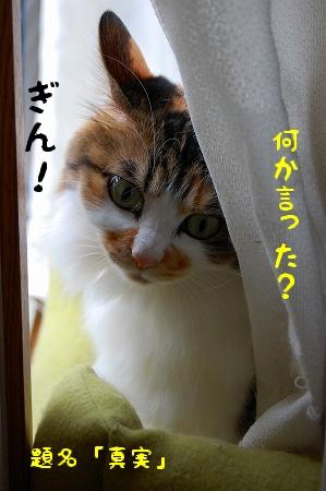 c0181639_029594.jpg