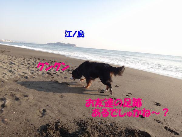 a0108146_18174121.jpg