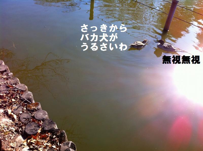 a0147921_02409.jpg