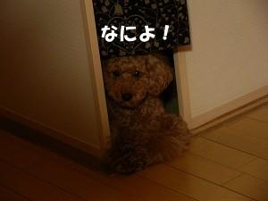 c0135363_1395932.jpg