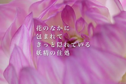 e0200056_2231016.jpg