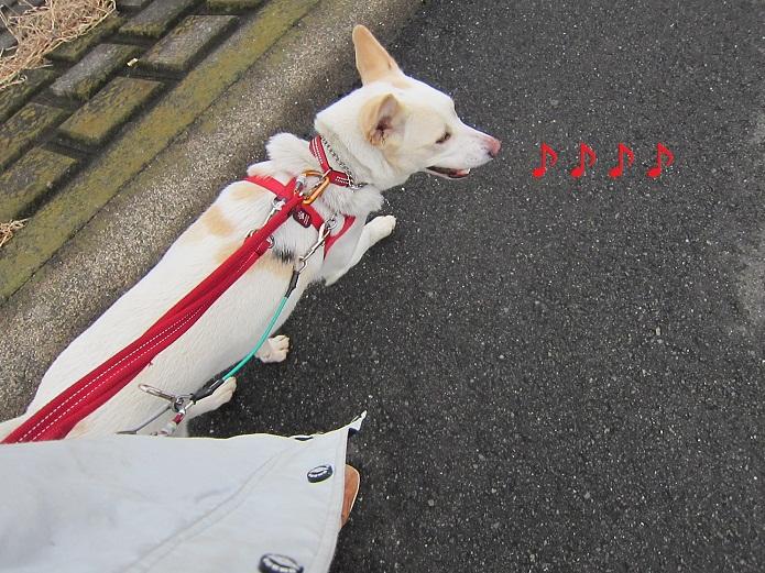 a0132275_1505592.jpg