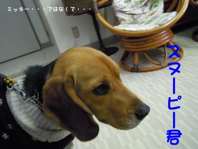 c0166622_1674976.jpg