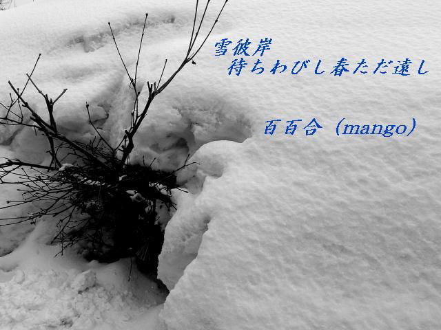 a0007388_11225324.jpg