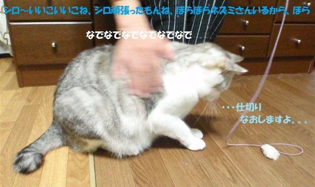 a0159490_16314511.jpg